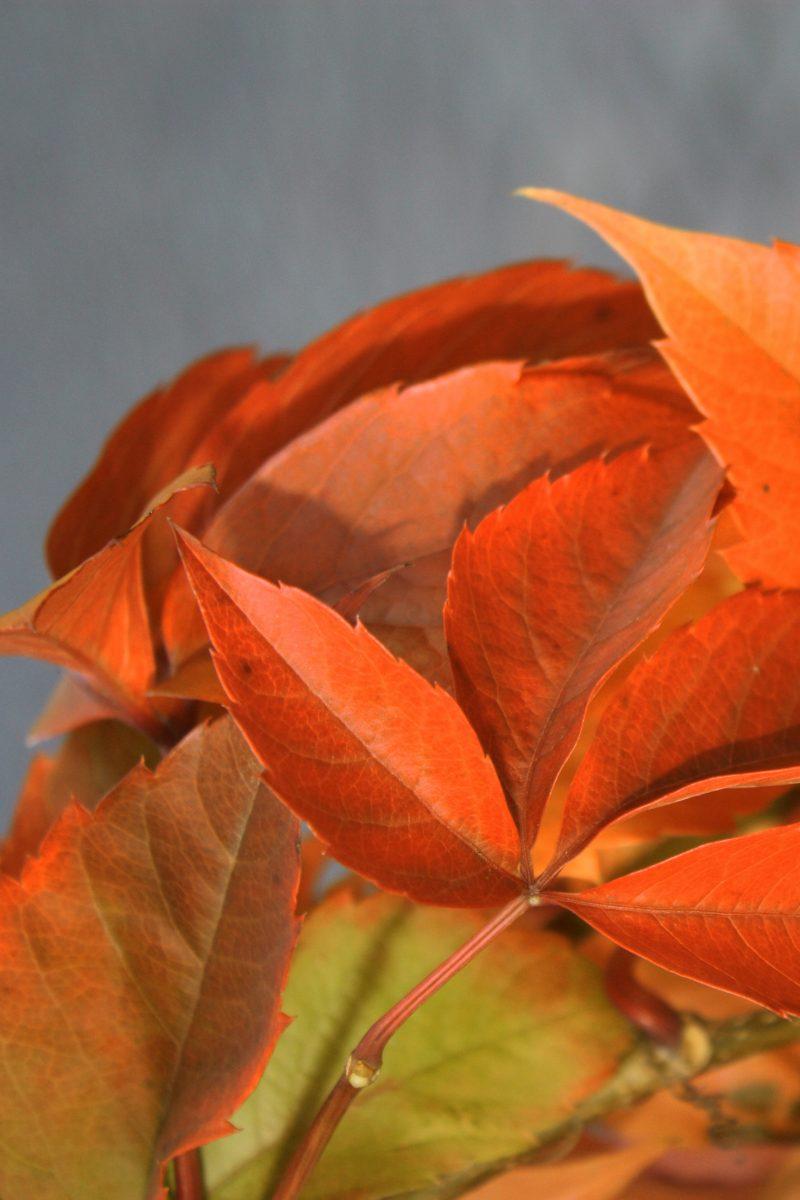 autumn impressions, 2010 #3