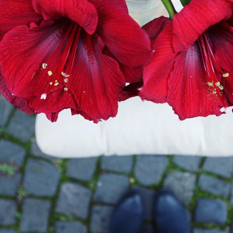 Lovely Bloomy Red
